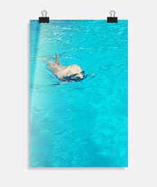 monsieur delfi