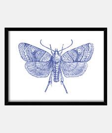 Moth blue