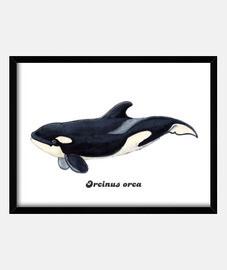 neonato orca casella telaio orizzontale 4: 3 (40 x 30 cm)