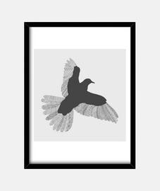 oiseau grey