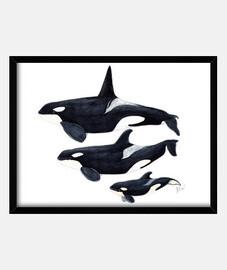 Orca Cuadro con marco horizontal 4:3 (40 x 30 cm)