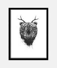 orso arrabbiato