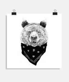 orso selvatico