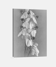 pc orchidée