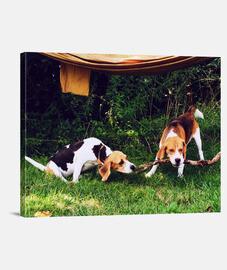 perros jugando full wrap
