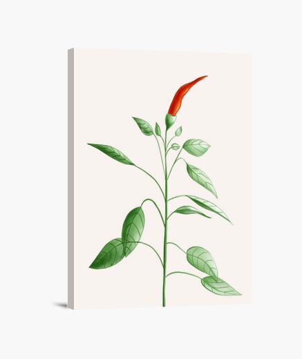 Tableau Piment Chaud Plante Botanique Dessin