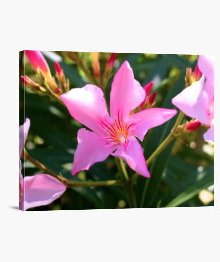 Lienzo Pink