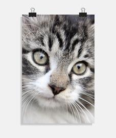 Poster chat mignon