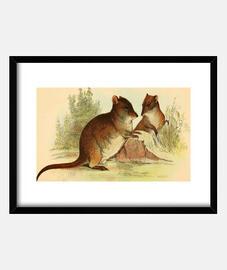 Póster Naturaleza - Ratas de campo