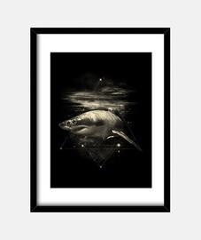 requin dans l'espace
