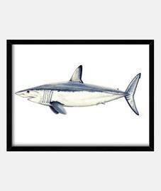 requin taupe - photo avec cadre horizontal 4: 3 (40 x 30 cm)