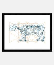rinho skelett