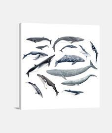 Ronda de ballenas cuadro
