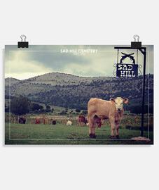 sad hill cow