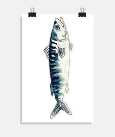 sardina