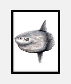 scatola di pesci luna (mola mola)