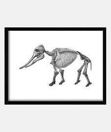 Skeleton Mammoth