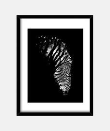 spazio zebra