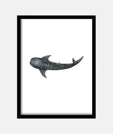 squalo balena per sub tela