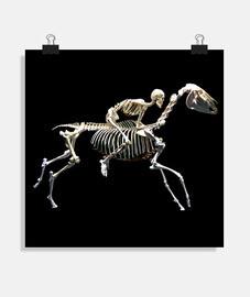 Squelette equestre