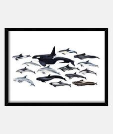 tableau épaulards, des dauphins et blackfish