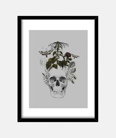 teschio con fiori e animali