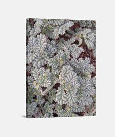 Texturas - Plantas