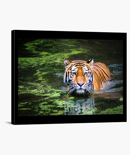 Stampa su tela Tigre