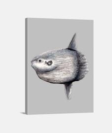 toile arlequin (mola mola)