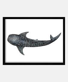 toile baleine plongeurs de requin