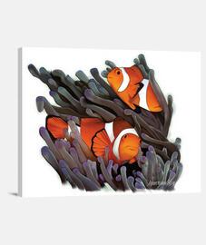 toile de poisson clown blanc exlusivo