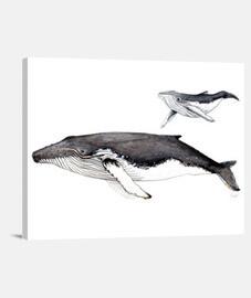 toile de reproduction des baleines à bosse