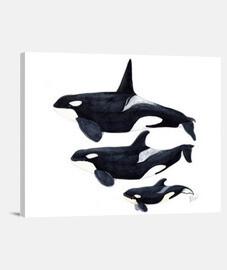toile orca horizontale 4: 3 - (40 x 30 cm)