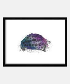 tortue cosmique 4
