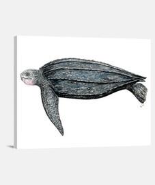 tortue de toile (dermochelys coriacea)