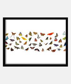 Varias mariposas