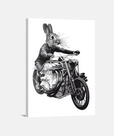 veloce rabbit