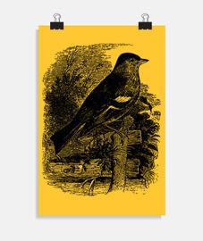 Vintage Art - Bird