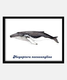 Yubarta ballena jorobada cuadro