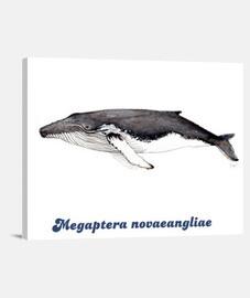 Yubarta ballena jorobada lienzo