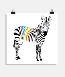 Zebra del orgullo. poster