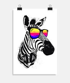 zebra fresca