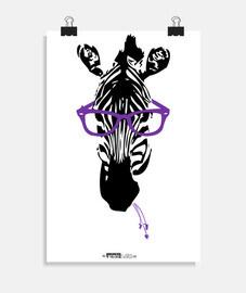 Zebra Gafa papa sta