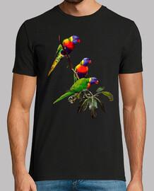 3 pappagalli