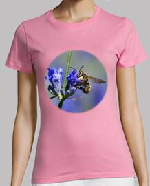 abeille sur les fleurs de lavande (poitrine)