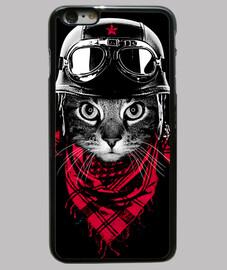 adventurer cat