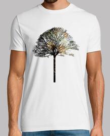 albero ix