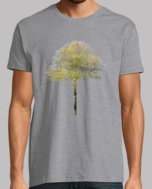albero xii