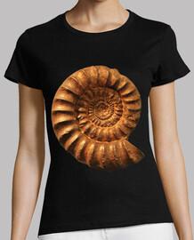 ammonite / nautile / fibonacci