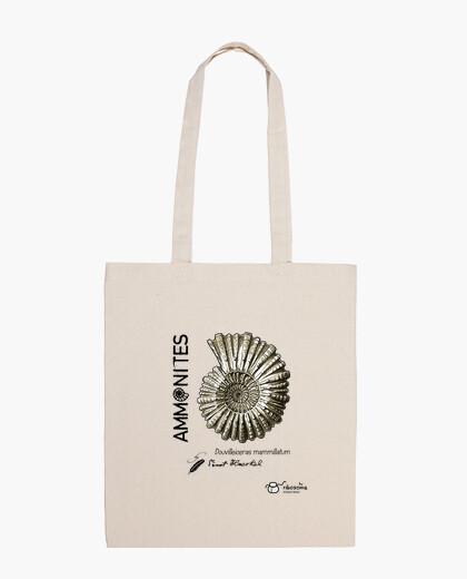 Bolsa Ammonites